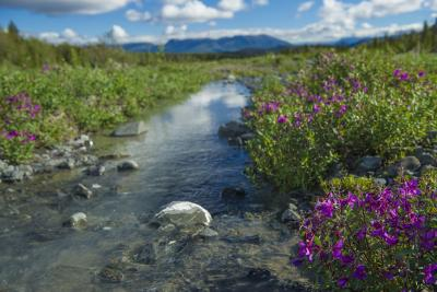 A creek and fireweed